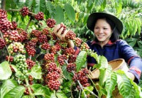 Vietnam – New King of Coffee